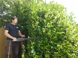 hedge trimming Surrey and Hampshire