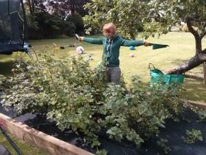garden maintenance Surrey and Hampshire