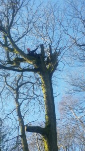 Tree cutting service Guildford