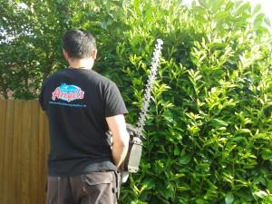 Hedge cutting Ash Vale, Ash, Aldershot