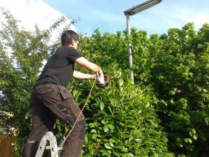 Hedge trimming Ash Vale, Ash, Mytchett