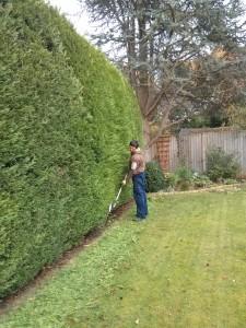 Hedge cutting Godalming, Farncombe