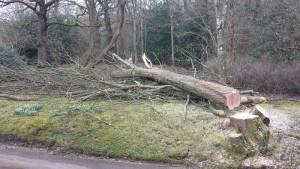 tree cutting Surrey