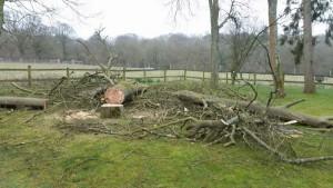 Tree cutting Godalming, Farncombe